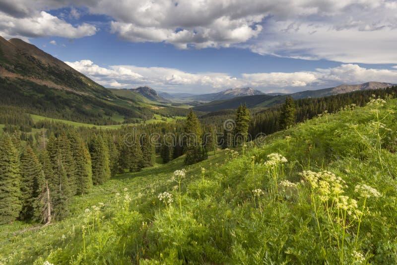 Wildflowers s'élevant sur un flanc de coteau en butte crêtée le Colorado photographie stock libre de droits