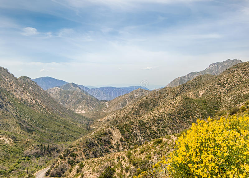 Wildflowers, San Gabriel Mountains, Angeles National Forest, CA. Wildflowers and the San Gabriel Mountains, from the Jarvis Memorial Vista, on the Angeles Crest stock photography