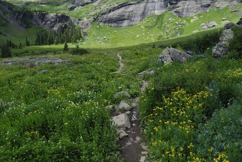 Download Wildflowers In San Juan Mountains In Colorado Stock Image - Image: 10543501
