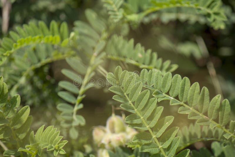 Wildflowers, spruiten met bladerenclose-up op de zomer wild gebied stock foto