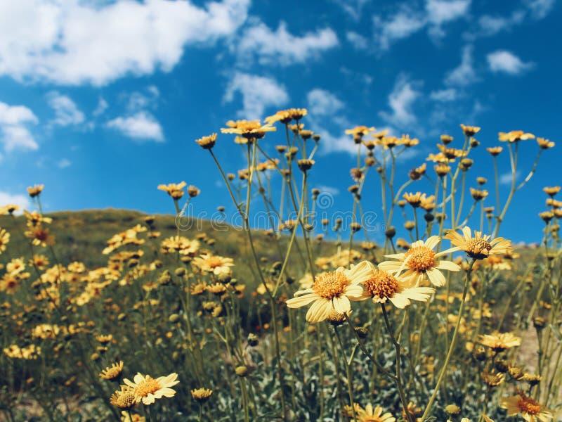 Wildflowers su un pomeriggio soleggiato immagine stock