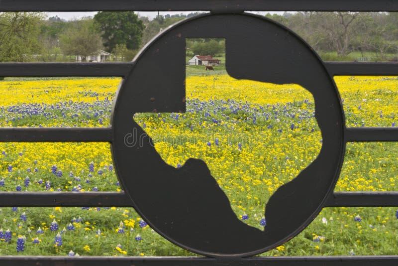 Wildflowers su un ranch immagine stock libera da diritti