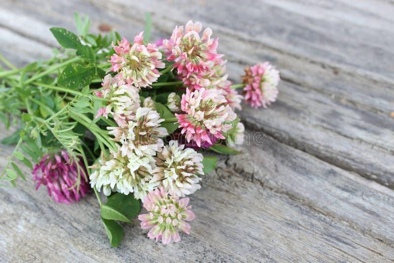 Wildflowers sui precedenti dei bordi immagini stock