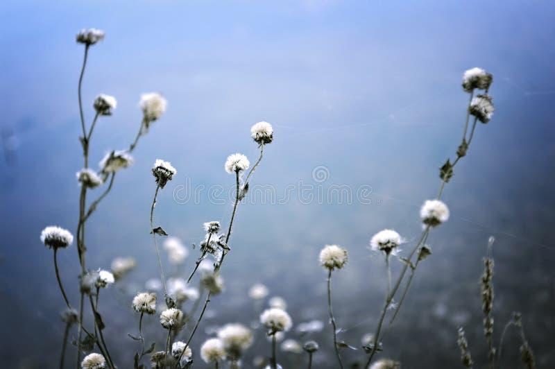 Wildflowers sur le fond bleu photo stock