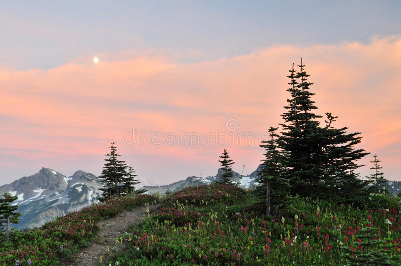 Wildflowers and tatoosh mountain range at sunset stock photo