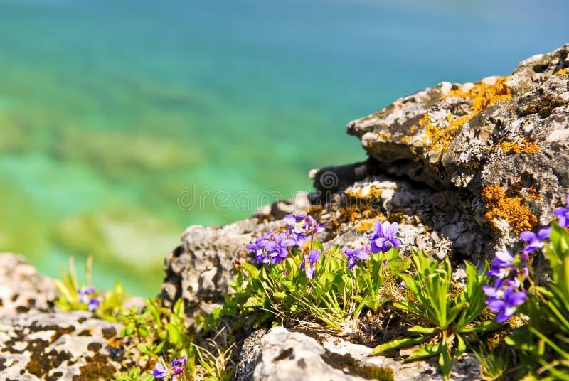 Wildflowers am Ufer des georgischen Schachtes stockbild