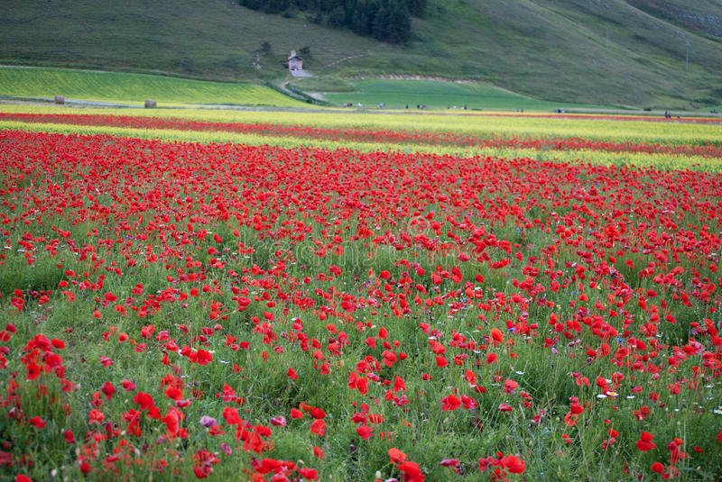 Wildflowers in Umbria Italy royalty free stock photo