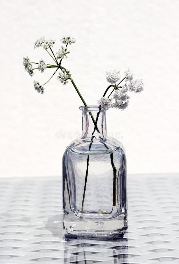 Wildflowers in un barattolo di vetro fotografie stock libere da diritti