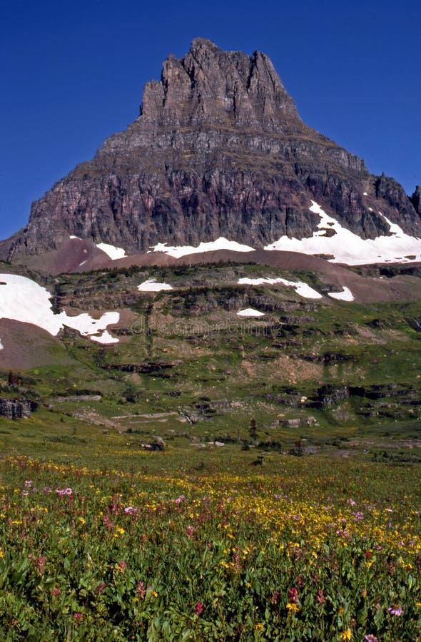 Wildflowers und Berg stockfoto