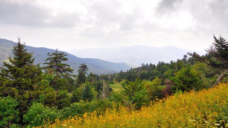 Wildflowers und Fichtetannenwaldlandschaft entlang blauem Ridge Parkway im Appalachen stockbilder