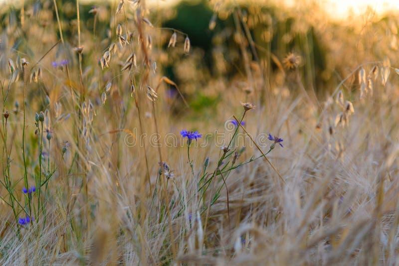 Wildflowers und Gräser stockbild