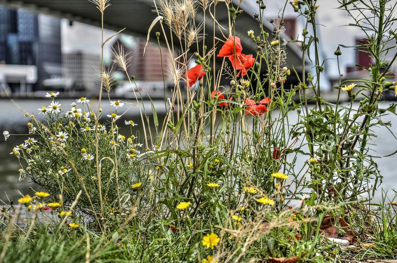Wildflowers under the bridge royalty free stock photography