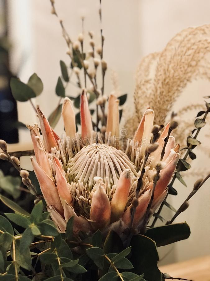 Wildflowers in a vase. Indoor royalty free stock photo