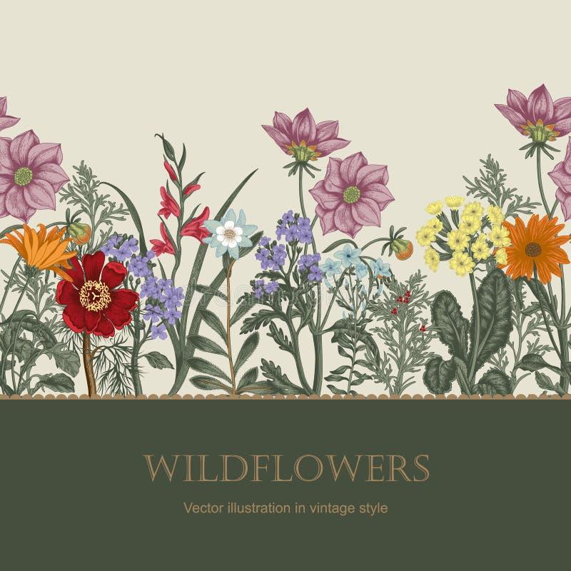 Wildflowers. Vector illustration in vintage style. Festive postcard. stock illustration