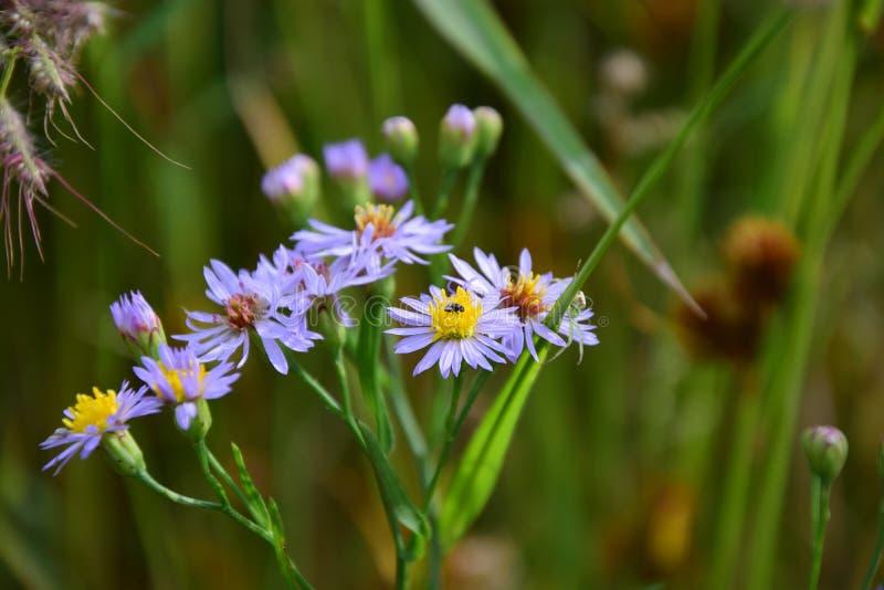 Wildflowers royalty free stock image