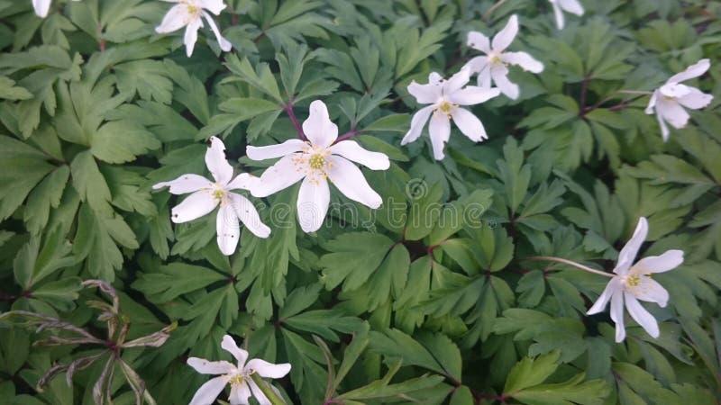 Wildflowers in volledige bloei royalty-vrije stock foto's