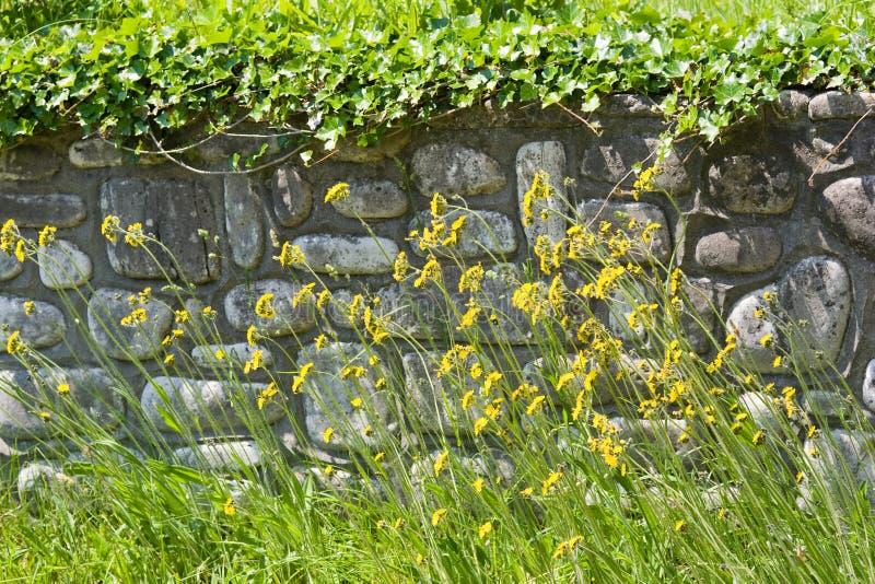Wildflowers vor Steinstützmauer stockfotos