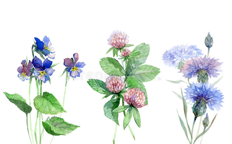 Wildflowers watercolor set with violet, clover, cornflower. stock illustration