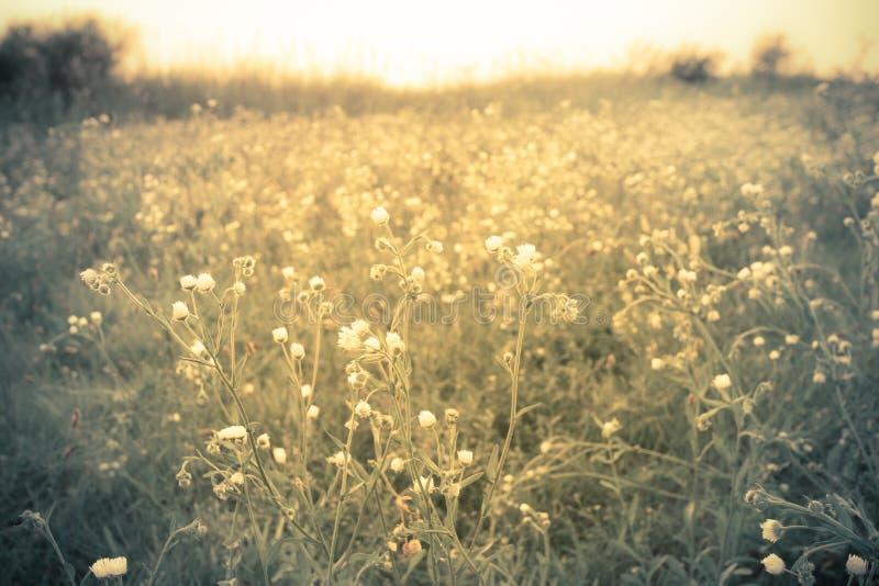 Wildflowers in weide gouden licht stock foto