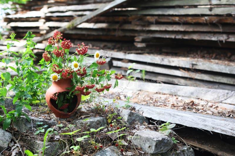 Wildflowers wiązki wciąż życie fotografia royalty free