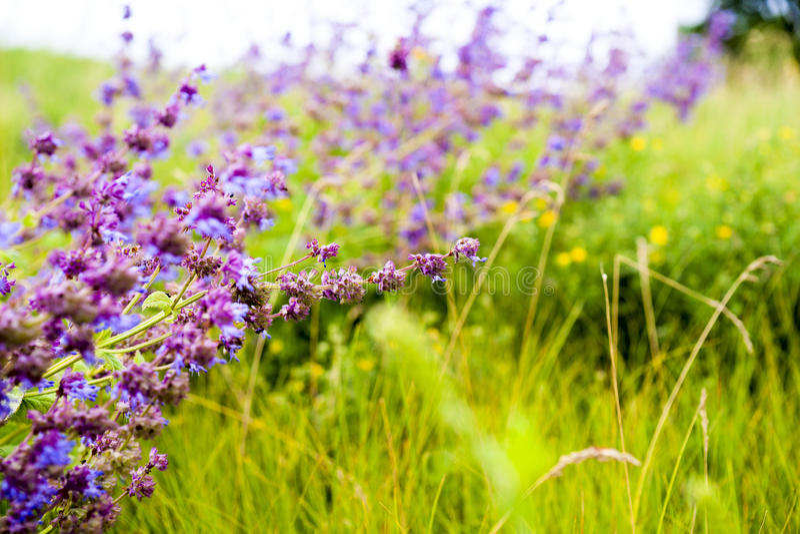 wildflowers Wildflowerwiese Blumen-Blumensträuße Blume und schöne Blumenblätter lizenzfreies stockfoto