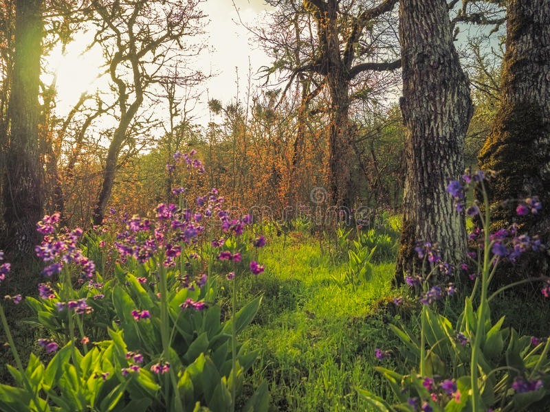 Wildflowers in wood at sunrise stock images