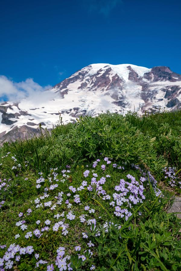 Wildflowers y el Monte Rainier hermosos, estado de Washington fotos de archivo