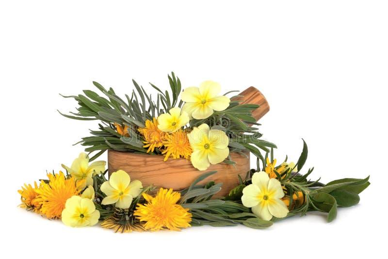 Wildflowers y hojas de la hierba imagen de archivo