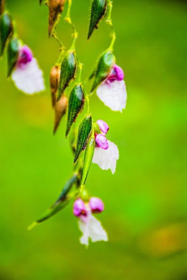 Wildflowers y pétalos blancos y púrpuras imagen de archivo libre de regalías