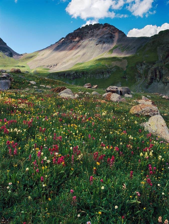 Wildflowers y pico V4 en los lagos lavabo, San Juan Range, Colorado ice fotos de archivo libres de regalías