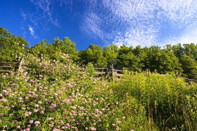 Wildflowers am Zaun auf blauem Ridge Parkway North Carolina stockfotos