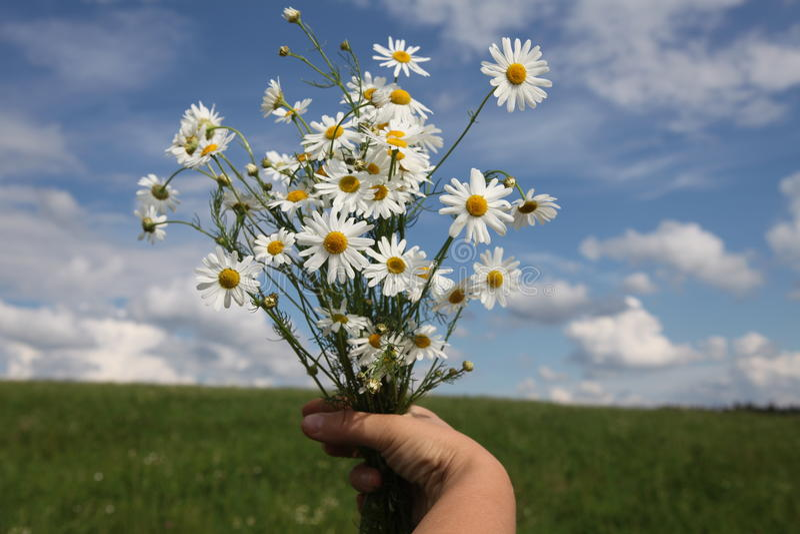 Wildflowersblumenstrauß lizenzfreies stockfoto