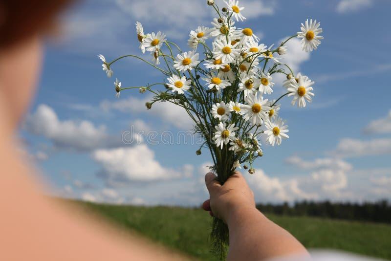 Wildflowersblumenstrauß in der Hand lizenzfreies stockfoto