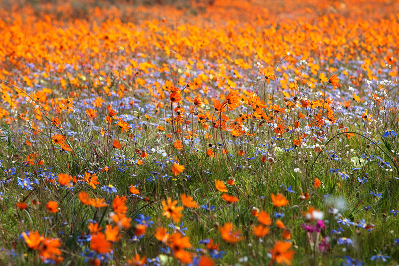 Wildflowerteppich lizenzfreies stockbild