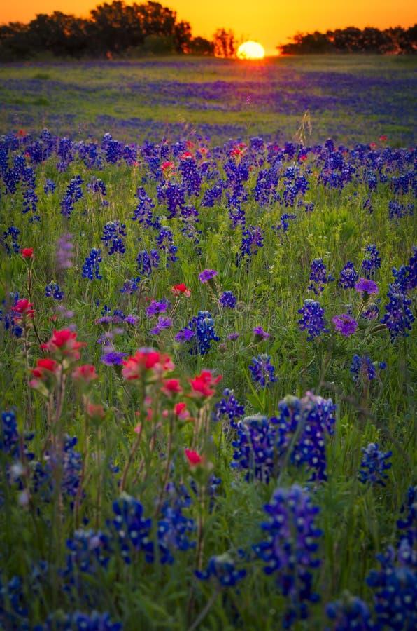 Wildflowerzonsopgang op Sugar Ridge Road royalty-vrije stock afbeeldingen