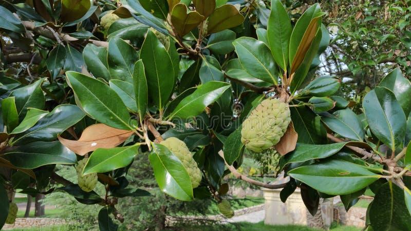 Wildfrüchte im Park lizenzfreie stockfotografie