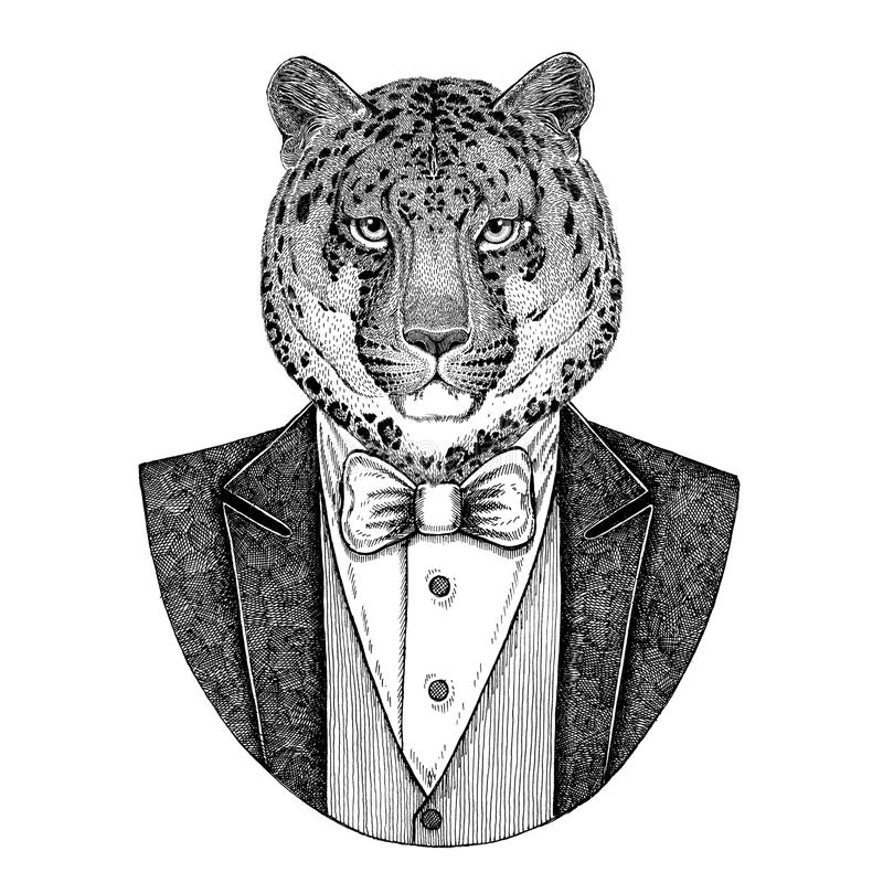Wildkatze-Leopard-Katze-O ` - gezeichnete Illustration des Bergpanthers Hand stock abbildung