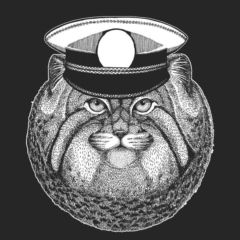 Wildkatze Manul-Vektordruck für Kinder Capitan, Piratentier E Design für Kindergarten, Schulkinder vektor abbildung
