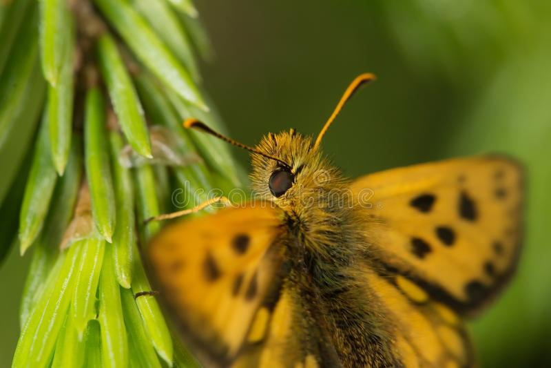 wildlife μακρόκοσμος όμορφα έντομα Ζωύφια, αράχνες, πεταλούδες και άλλα όμορφα έντομα στοκ εικόνα με δικαίωμα ελεύθερης χρήσης