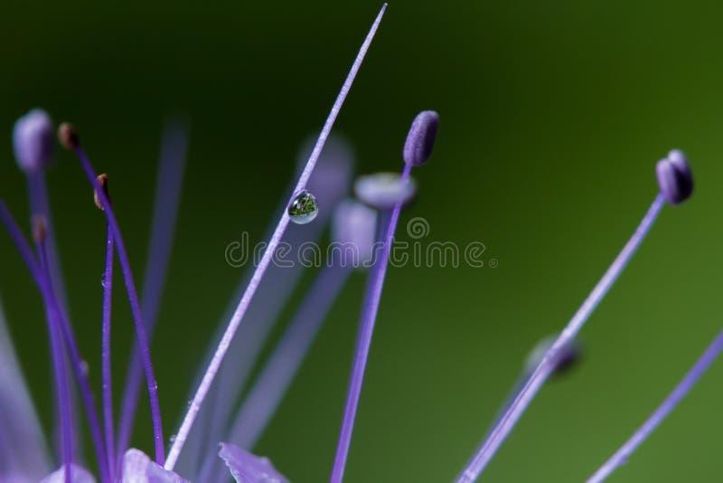 wildlife όμορφο στενό λουλούδι επάνω μακρόκοσμος στοκ εικόνες