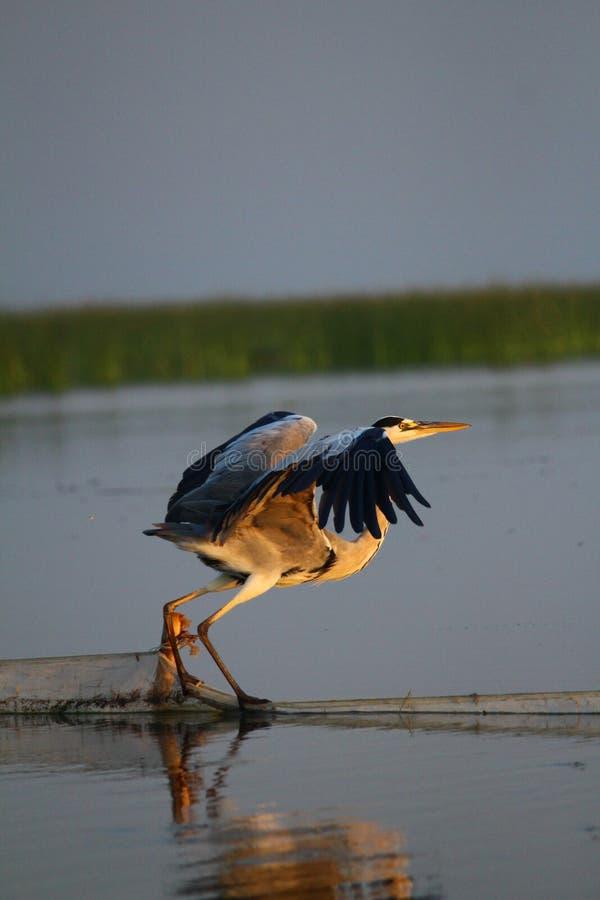 wildlife стоковое изображение rf