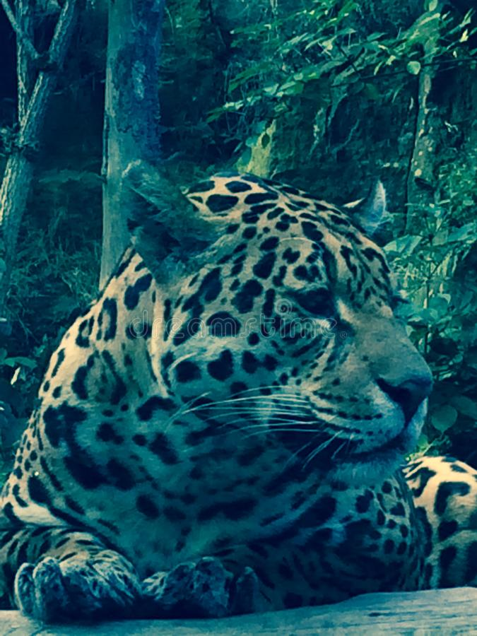 wildlife στοκ εικόνα με δικαίωμα ελεύθερης χρήσης