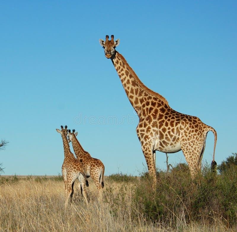 Wildlife stock photography