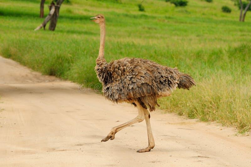 Download Wildlife In Africa Stock Photo - Image: 31542890