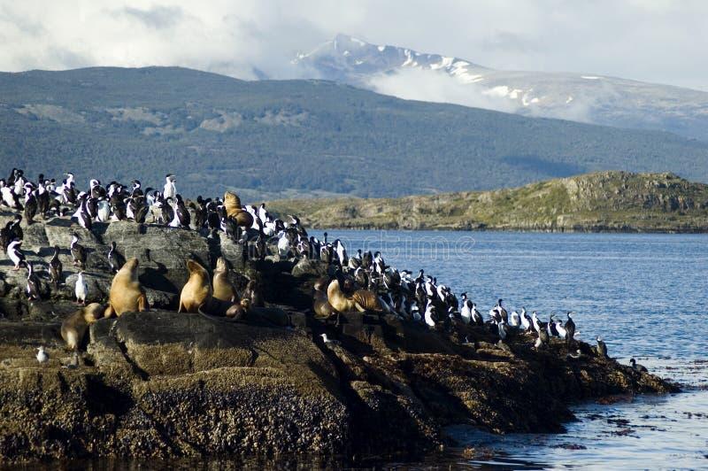 Wildlife argentina stock photos
