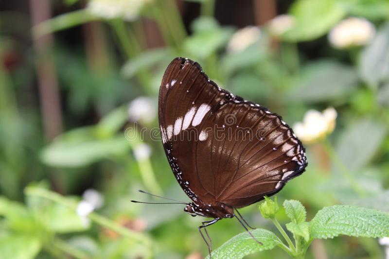 A beautiful butterflies in the green plants. The wildlife. A beautiful butterflies in the plants. Summer time 2018. Exotics and Tropical style stock image