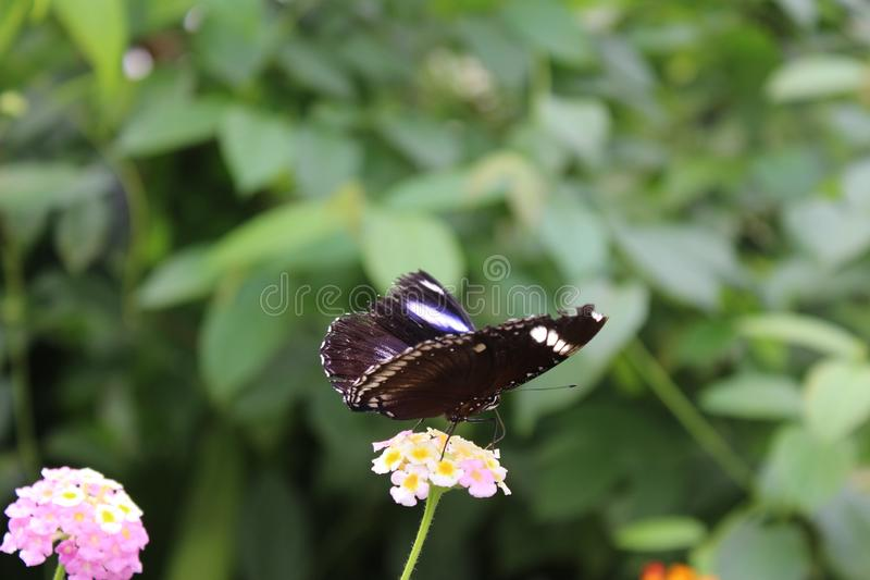 A beautiful butterflies in the green plants. The wildlife. A beautiful butterflies in the plants. Summer time 2018. Exotics and Tropical style royalty free stock photos