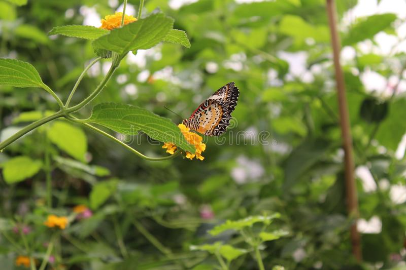 A beautiful butterflies in the green plants. The wildlife. A beautiful butterflies in the plants. Summer time 2018. Exotics and Tropical style royalty free stock image