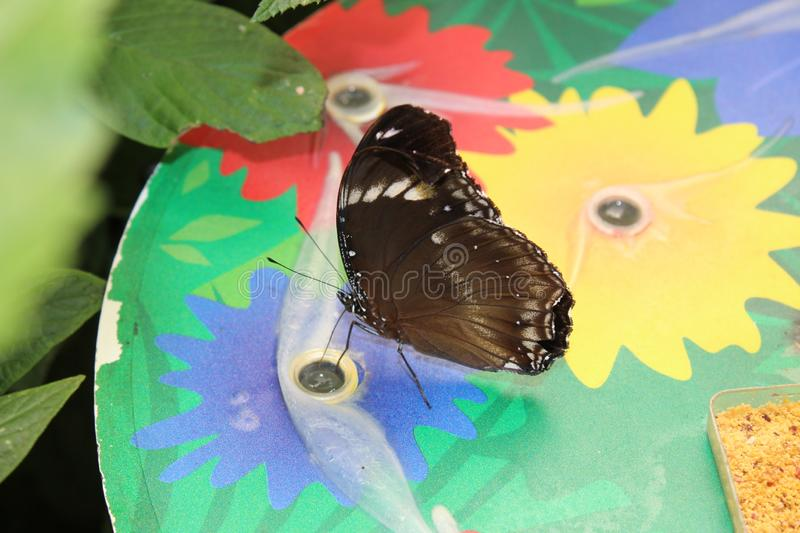 A beautiful butterflies in the green plants. The wildlife. A beautiful butterflies in the plants. Summer time 2018. Exotics and Tropical style stock photo