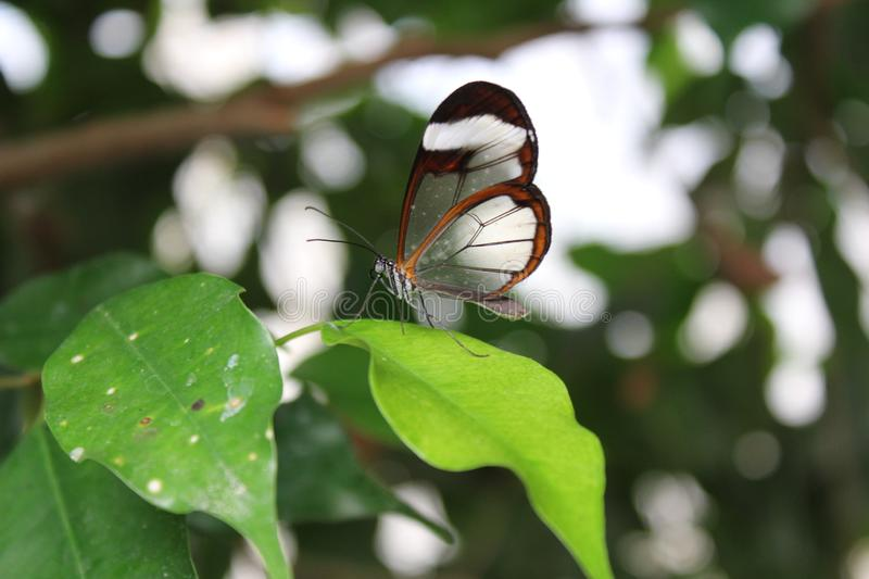 A beautiful butterflies in the green plants. The wildlife. A beautiful flowers and butterflies. Summer time 2018. Exotics and Tropical style stock photo